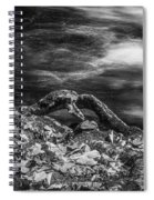 Fall Colors Stream Great Smoky Mountains Painted Bw Spiral Notebook