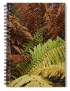 Fall Ferns Acadia National Park Img 6355 Spiral Notebook