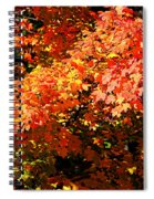Fall Foliage Colors 21 Spiral Notebook