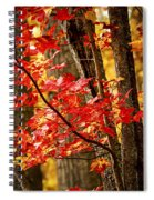 Fall Forest Detail Spiral Notebook