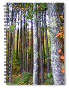 Fall Ivy In Pine Tree Forest Spiral Notebook