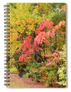 Fall Landscape 3 Spiral Notebook