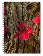 Fall Leaves Against Tree Trunk Spiral Notebook
