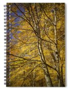 Fall Leaves And Trees In West Michigan No171 Spiral Notebook
