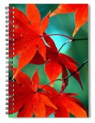 Fall Leaves In All Their Glory Spiral Notebook