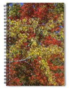 Fall Leaves In So Cal Spiral Notebook