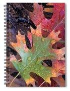 Fall Leaves I V Spiral Notebook