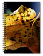 Fall Maple Leaf Spiral Notebook