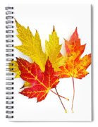 Fall Maple Leaves On White Spiral Notebook