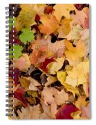 Fall Maples Spiral Notebook