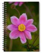 Fall Pink Daisy Spiral Notebook