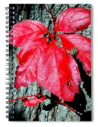 Fall Red Leaf Spiral Notebook