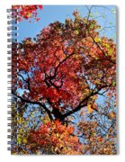 Fall Trees Of Wnc Spiral Notebook