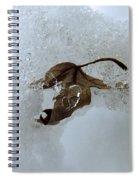 Fallen Beauty Spiral Notebook