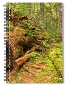 Fallen Rainforest Giant Spiral Notebook