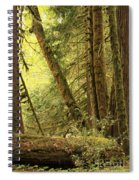 Falling Trees In The Rainforest Spiral Notebook