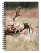 Fallow Deer - Amazing Antlers Spiral Notebook