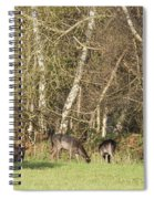 Fallow Deer Spiral Notebook