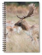 Fallow Deer Buck Spiral Notebook