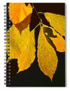Fall's Purest Gold Spiral Notebook