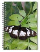 False Diadem Butterfly Spiral Notebook