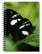 False Zebra Longwing Butterfly Spiral Notebook