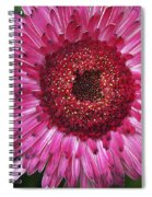 Fancy Pink Daisy Spiral Notebook