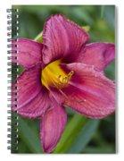 Fancy Red Wine Daylily Spiral Notebook