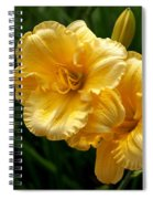 Fancy Yellow Daylilies Spiral Notebook