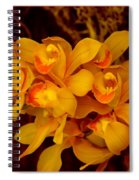 Fascinating Beauty Spiral Notebook