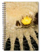 Fascinating Cactus Bloom - Soft And Fragile Among The Thorns Spiral Notebook