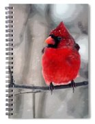 Fat Cardinal In The Snow Spiral Notebook
