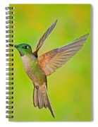 Fawn-breasted Brilliant Hummingbird Spiral Notebook