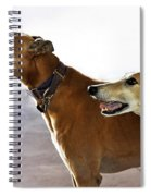 Fawn Greyhound Dogs Profile Spiral Notebook