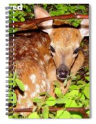 Fawn In The Forest - Inspirational - Religious Spiral Notebook