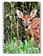 Fawn In The Grass Spiral Notebook