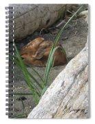 Fawn Resting On Beach Spiral Notebook