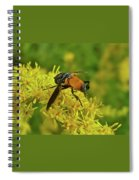 Feather-legged Fly On Goldenrod - Trichopoda Spiral Notebook