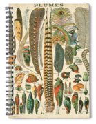 Feather Plumes-a Spiral Notebook
