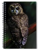 Feathered Beauty Spiral Notebook