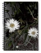 Feathered Daisy  Spiral Notebook