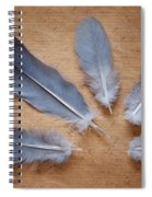 Feathers And Old Letter Spiral Notebook