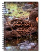 Feathers In Autumn Spiral Notebook