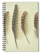 Feathers No2 Spiral Notebook