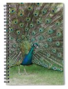 Feathers On Display Spiral Notebook