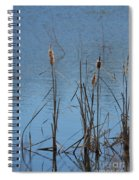 February Cattails Spiral Notebook
