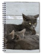 Feeding The Kittens Spiral Notebook