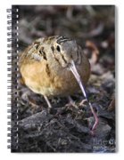 Feeding Woodcock Spiral Notebook