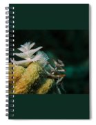 Feeding Worms Spiral Notebook