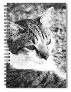 Feline Pose Spiral Notebook